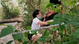 คลิปลับนักศึกษาสาวไทยหุ่นดีฟิตใจกล้าแอบไปนั่งดูดควยให้แฟนหนุ่มในป่าหญ้าริมน้ำตก